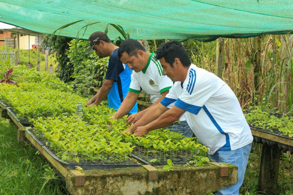 Agroforestería y diversificación productiva